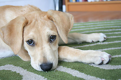 puppy_eyes